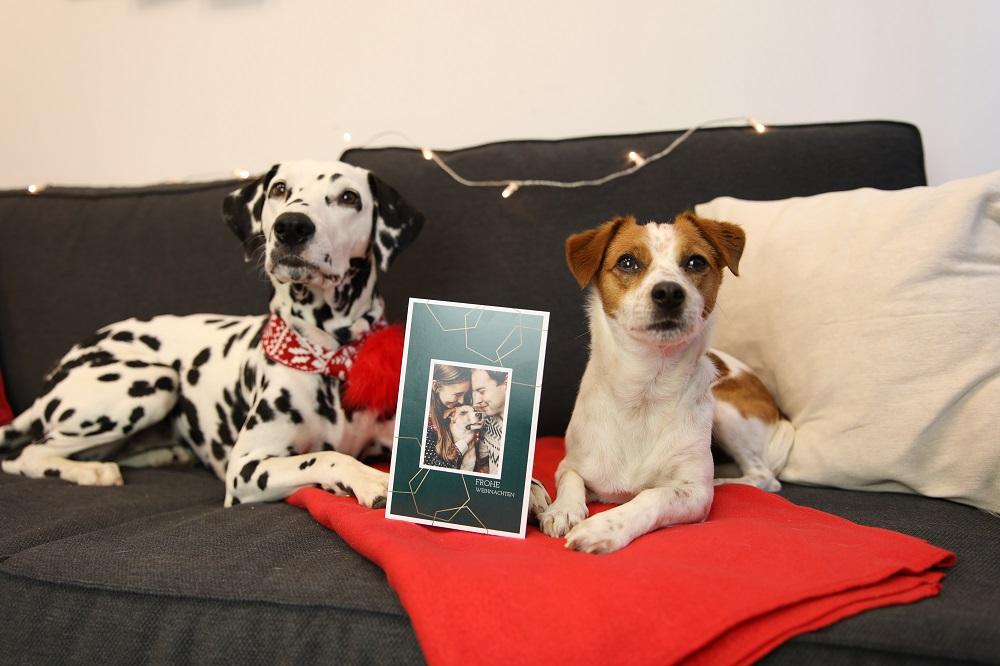 Hunde mit Weihnachtskarte