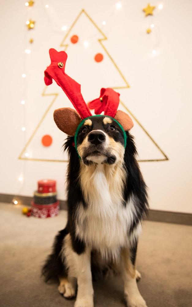 Weihnachtsfoto-Idee mit Hund
