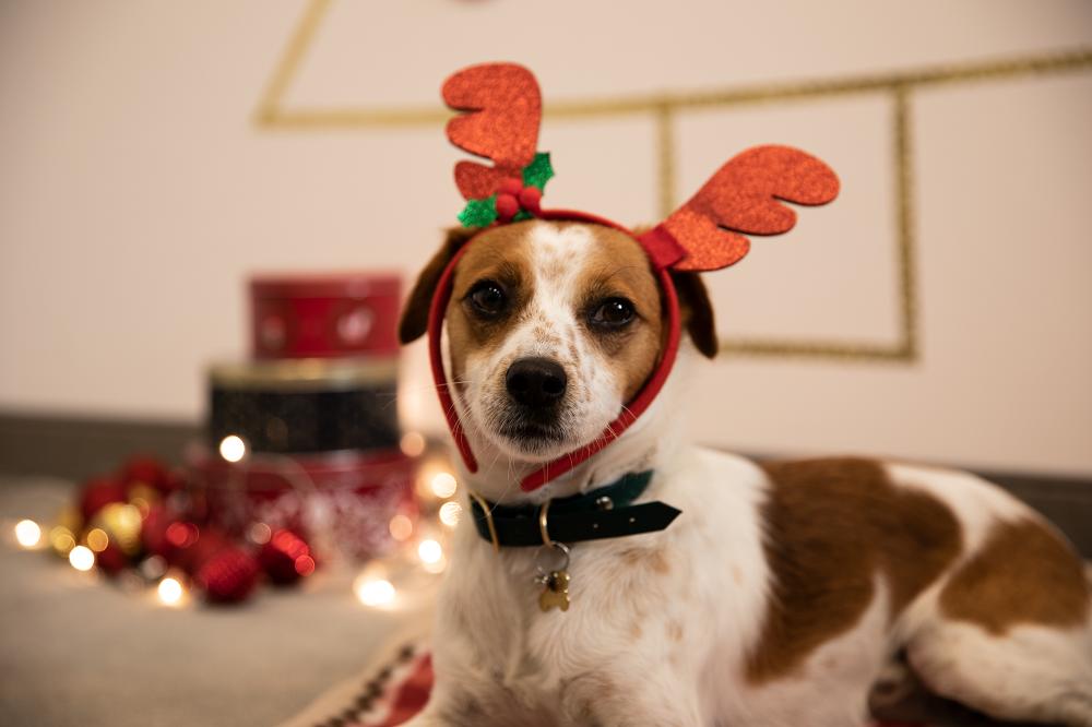 Weihnachtsfoto mit Hund