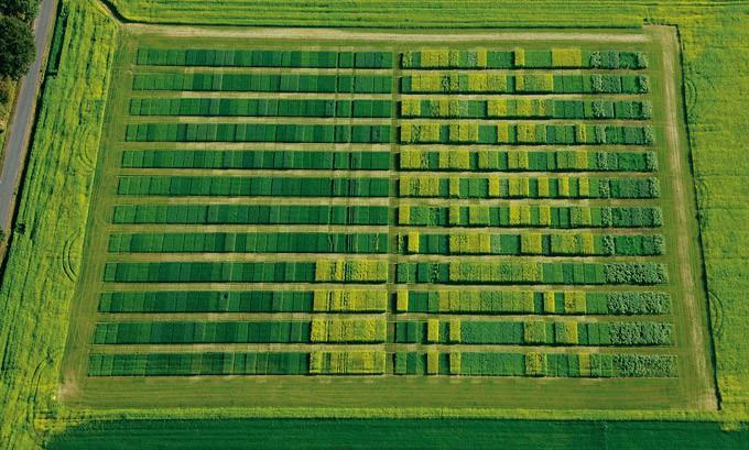 Felder aus der Vogelperspektive