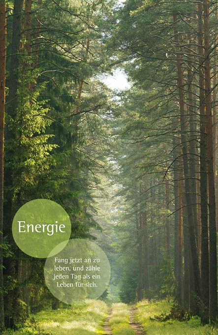 Motivationsbild - Wald - Energie